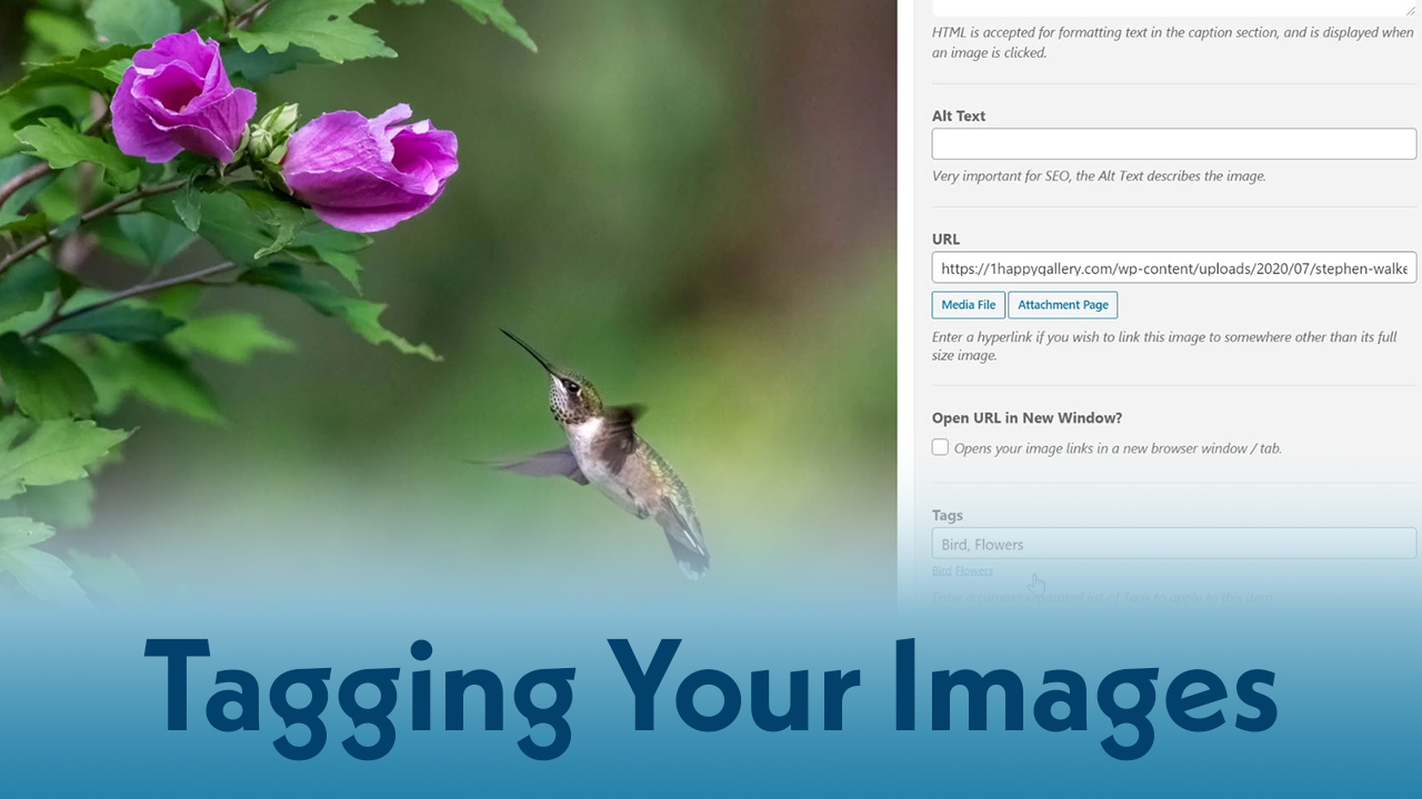 Tagging Your Images